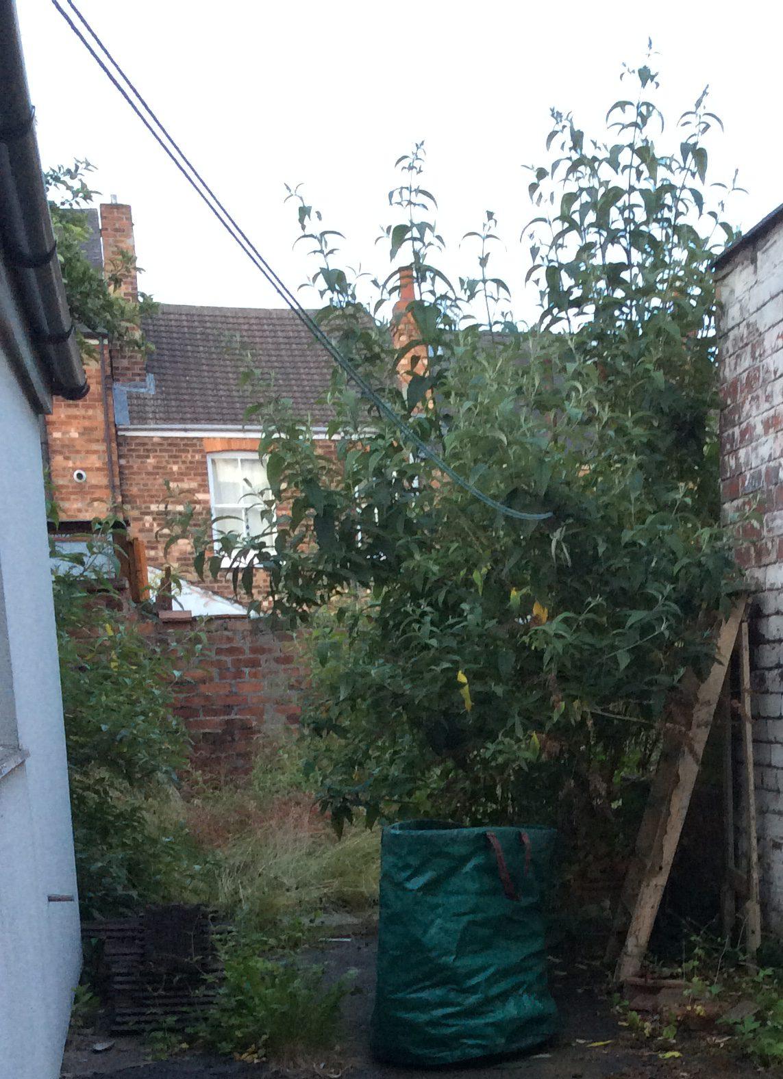 My jungle-garden has taken over